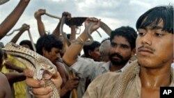 ہرسال ڈیڑھ لاکھ افراد سانپ کے ڈسنے سےمرتےہیں