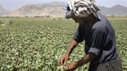 U.S., Afghanistan Counternarcotics Cooperation