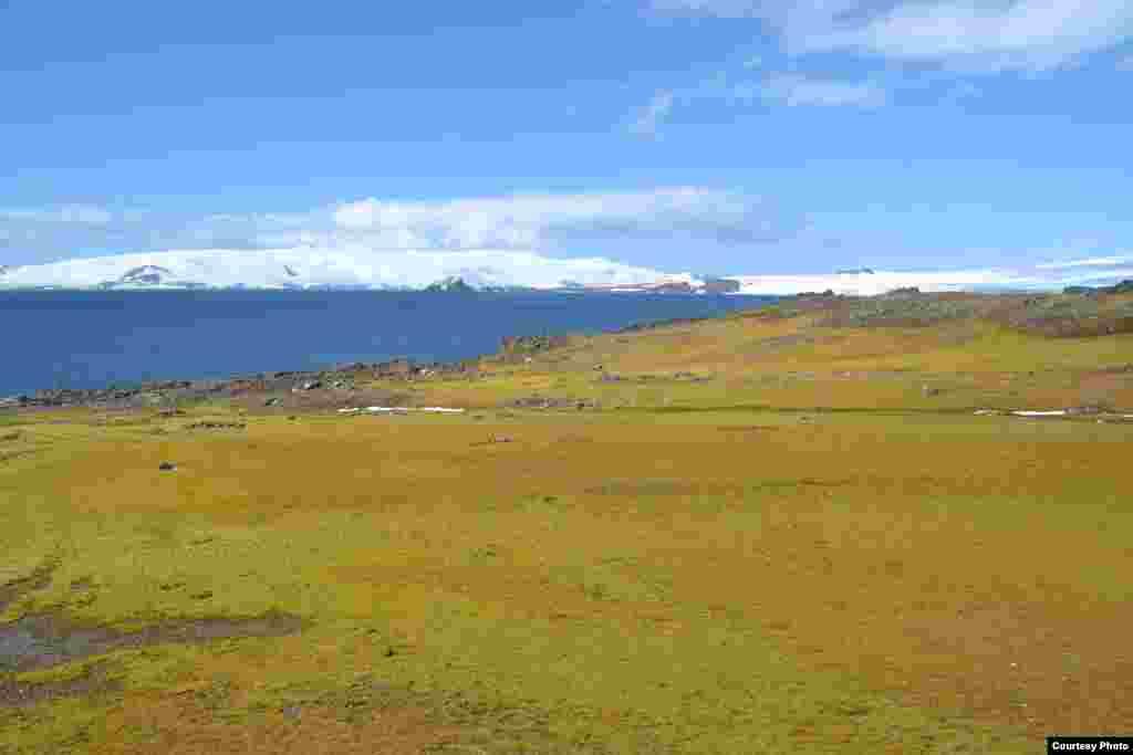 La isla Barrientos en las islas Shetland del Sur, cubierta de musgo y algas en una foto de archivo de 2012. (Dan Charman/Matt Amesbury)