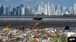海洋塑料垃圾氾濫 威脅生態清理難