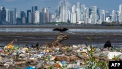 Vultures are seen over garbage, including plastic waste, at the beach of the Costa del Este neighborhood in Panama City, on June 08, 2020, during the World Oceans Day.