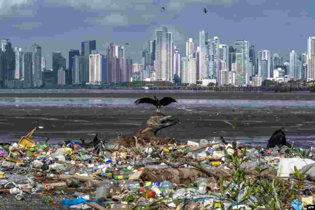 Vultures are seen over waste material at the beach of the Costa del Este neighborhood in Panama City, June 08, 2020, during World Oceans Day.