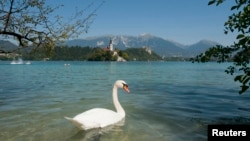 "FILE - A swan swims in Lake Bled, Slovenia, Aug. 26, 2011. Slovenia's ""aggressive"" environmental policy has included the creation of large protected areas on land and sea, according to the London-based Legatum Institute."