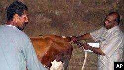 美国帮助埃及当地民众改善兽医服务