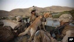 تحلیل گر ' سی آی ای' : جنگ در افغانستان به بن بست رو برو میباشد