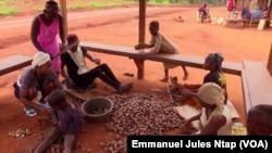 Des femmes concassent des graines de moabi à l'est du Cameroun, le 20 septembre 2021.