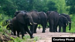 FILE: Elephants, Selous Game Reserve. (Creative Commons)