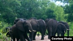 Un marché d'ivoire toujours croissant en Chine