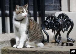 Larry the Downing Street cat sits on the steps of 10 Downing Street in London, after Britain's Prime Minister David Cameron left to face prime minister's questions for the last time, July 13, 2016.