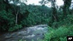 Forêt tropicale au Gabon
