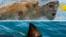 Phelps Shark
