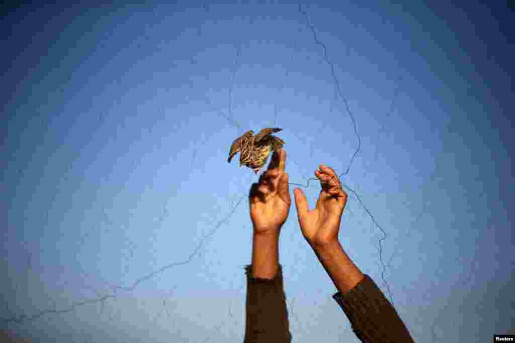 A man takes a quail from a net after catching it on a beach in Khan Younis, in the southern Gaza Strip.