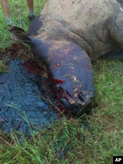 Poachers killed this rhino at South Africa's Kariega Game Reserve last year