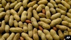Boko Haram utilise de l'huile d'arachide, qui provient des cacahouètes, pour produire du biocarburant.