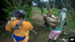 Para buruh perempuan yang bekerja di perkebunan kelapa sawit di Sumatera (foto: ilustrasi).