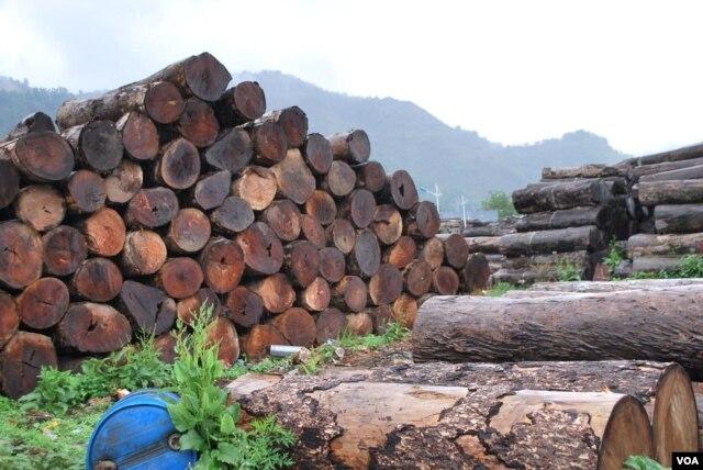 云南片马口岸旁边堆积的木材,照片中显示的只是其中极少的一部分。(美国之音朱诺拍摄,2014年5月7日)