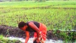 """Pesticidas """"ameaçam"""" solos e vidas humanas em Moçambique"""