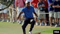 Tiger Woods no gana un título desde el Masters de Australia de 2009, o sea con las manos vacías en 22 torneos. Todos después que se hicieran públicas sus infidelidades en noviembre de ese mismo año.