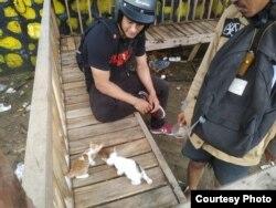 Sukarelawan memberikan pakan kepada dua kucing di Gowa, Sulawesi Selatan. (Courtesy: Feed Not Bomb Gowa)