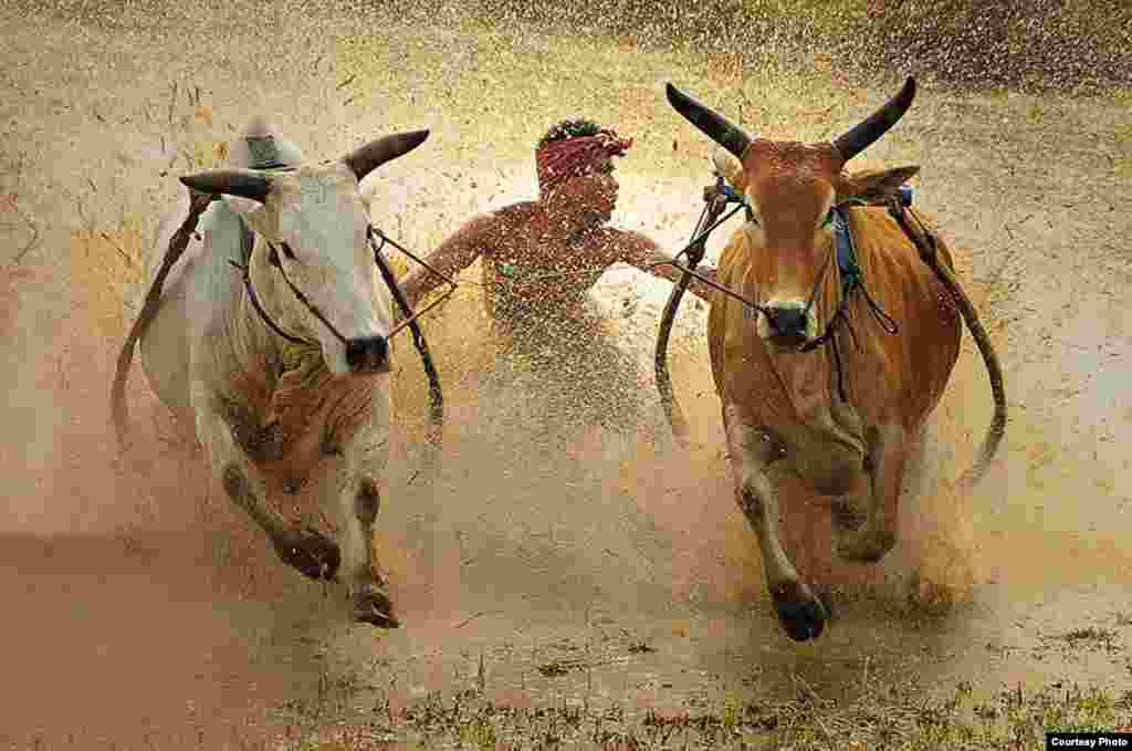 3rd Place - Dadan Ramdani, Indonesia  'Bull Race'