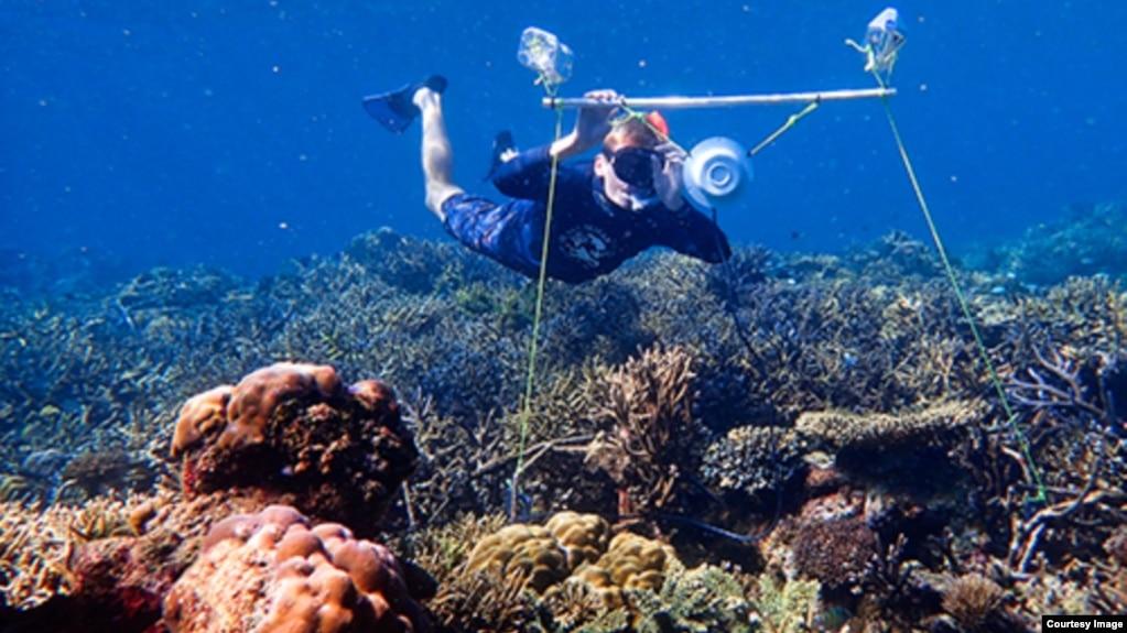 Tim Gordon deploys an underwater loudspeaker on a coral reef in Australia's northern Great Barrier Reef. Image Credit: Harry Harding, University of Bristol