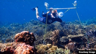 Researchers Use Sounds To Call Fish Back To Dead Coral