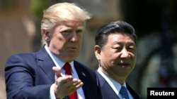도널드 트럼프(왼쪽) 미국 대통령이 지난 4월 플로리다주 마라라고 리조트에서 시진핑 중국 국가주석과 회담 후 함께 산책하고 있다.
