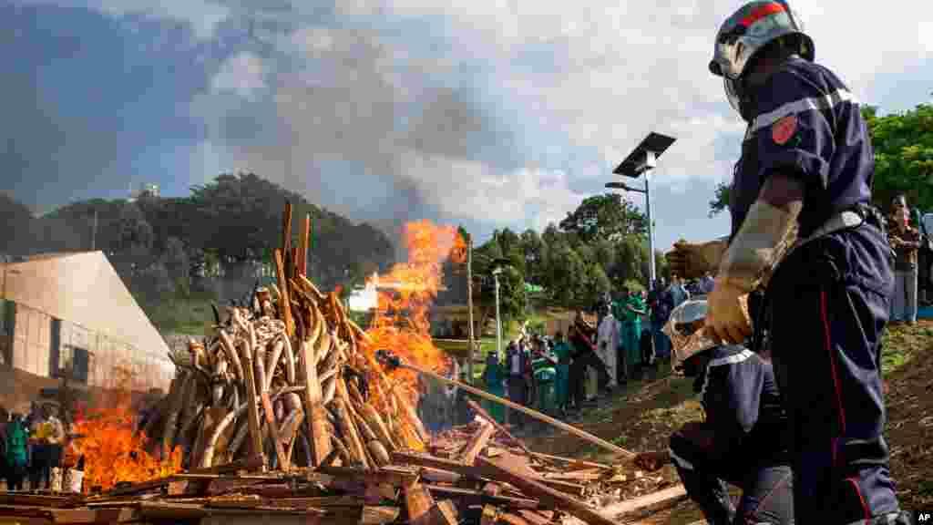Des tonnes d'ivoires incinérées en public, Palais des Congrès, Yaoundé, 19 avril 2016.