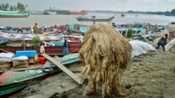 A worker carries jute to load on a boat at a rural market in Munshigonj, Bangladesh.