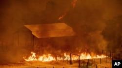 Las llamas rodean una construcción en Guinda, California, el domingo 1 de julio de 2018. Se ordenaron evacuaciones cuando vientos cálidos y secos alimentaron un incendio forestal descontrolado el domingo en las zonas rurales del norte de California, enviando una corriente de humo millas (120 kilómetros) al sur en el área de la Bahía de San Francisco. (AP Photo / Noah Berger)