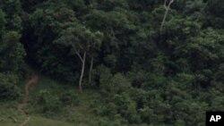 La réserve de Lope, au Gabon, 4 juillet 2001