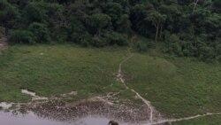 Les éco-gardes luttent contre le braconnage des éléphants avec l'aide de l'armée américaine