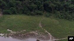 Un éléphant solitaire broute une clairière dans la forêt tropicale de la réserve de Lope, au Gabon, 4 juillet 2001