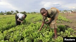 Displaced children pick vegetables from a garden near an Internally Displaced Peoples (IDP) camp in Kiwanja township in the rebel controlled territory in the eastern Democratic Republic of Congo, October 24, 2012.