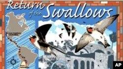 U mjesto San Juan Capistrano, lastavice se vraćaju točno na dan Svetog Josipa