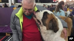 Rambo, a St. Bernard, licks his owner, Dr. BJ Jackson, of Lawrenceburg, Kentucky, after competing in the 141st Westminster Kennel Club Dog Show, Feb. 14, 2017, in New York.