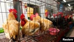 Suasana kandang ayam di sebuah pasar unggas di kota New Taipei, China, seusai penyemprotan anti virus H7N9 (8/4). Pihak berwenang China telah menangkap tiga orang terkait penyebaran isu yang keliru melalui internet tentang penyebaran virus H7N9 di propinsi Guizhou.