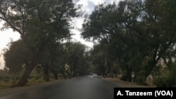 The road to Achin from Jalalabad was surrounded by tall green trees.