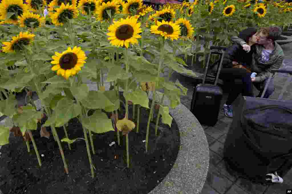 A couple surrounded by sunflowers kisses outside Schiphol Airport's passenger terminal in Amsterdam, the Netherlands.
