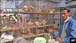 رنگ برنگے پرندوں کی سریلی بولیوں سے گونجتی کراچی کی 'پرندہ مارکیٹ'