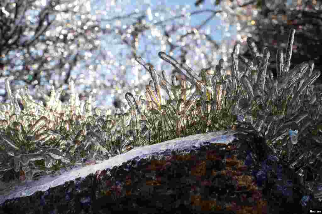 Field grass is seen coated in a layer of ice after a winter storm in Nyack, New York.