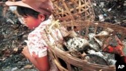 Seorang anak perempuan membantu orang tuanya bekerja menjadi pemulung sampah di Bantar Gebang, Jakarta (foto: dok). Pekerja anak di Indonesia saat ini diperkirakan mencapai 1,7 juta anak.