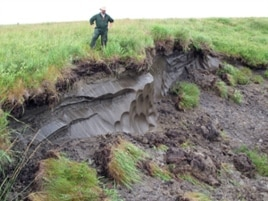 Thawing permafrost creates a formation called a thermokarst, which sends an overload of sediment and nutrients into streams in the Western Brooks Range of Alaska.