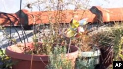 Roof Top Gardening is a Growing Trend in New York City