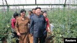 지난해 6월 북한 김정은 국방위 제1위원장이 평양시 사동구역의 장천채소전문농장을 시찰했다고 조선중앙통신이 보도했다. (자료사진)