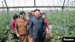 김정은 북한 국방위 제1위원장이 평양시 사동구역의 장천채소전문농장을 현지 시찰했다고 지난 6월 조선중앙통신이 보도했다. (자료사진)