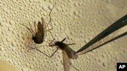 El virus del Nilo se transmite a través de la picadura de mosquitos.