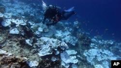 ຮູບພາບຈາກອົງການ NOAA ໃນເດືອນພຶດສະພາ ປີ 2016 ສະແດງໃຫ້ເຫັນຫີນປະກາລັງຈຳນວນນຶ່ງຕາຍ ຢູ່ອ້ອມແອ້ມ ເກາະຈາວິສ ທີ່ເປັນສ່ວນນຶ່ງ ຂອງ ອະນຸສາວະລີ ທາງທະເລແຫ່ງຊາດ ຂອງສະຫະລັດ.