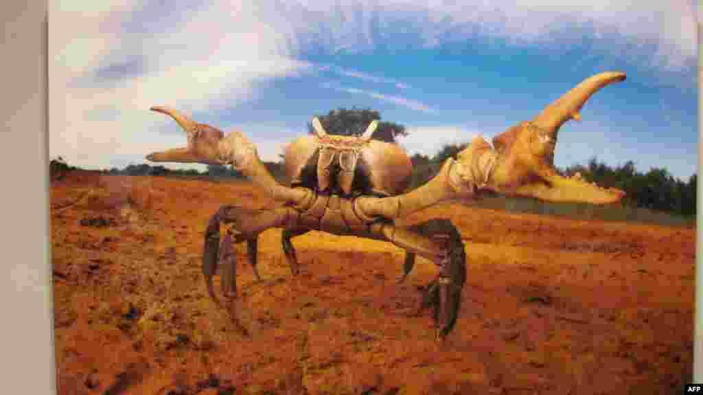 Amerikan Doğa Tarihi Müzesi'den Görüntüler