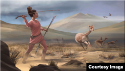 Artist reconstruction of Wilamaya Patjxa vicuña hunt. (Photo: Matthew Verdolivo UC Davis IET Academic Technology Services)